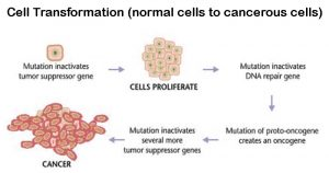 Cell Transformation (normal cells to cancerous cells)