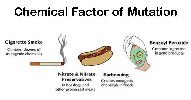 Chemical Factor of Mutation