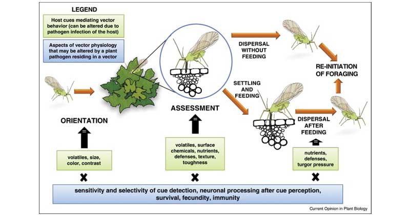 Effect of pathogens on plants