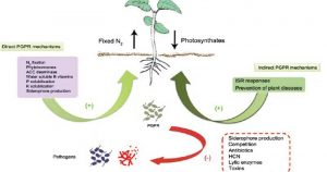 Biological and Chemical control of plant diseases