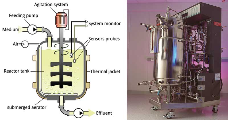 Design of a Fermenter