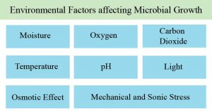 Environmental Factors affecting Microbial Growth