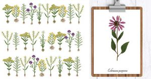 Herbarium Kinds and Functions