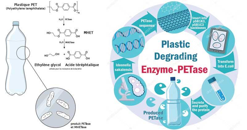Ideonella sakaiensis- Plastic eating bacteria