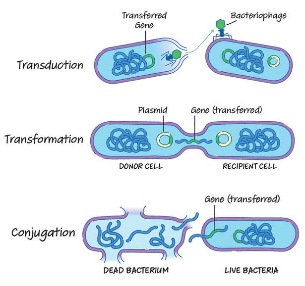 Mechanisms of Transformation, Transduction, and Conjugation