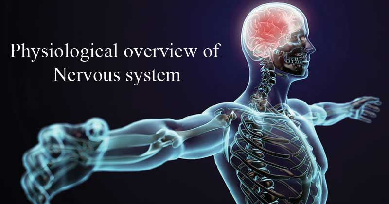 Physiological overview of nervous system