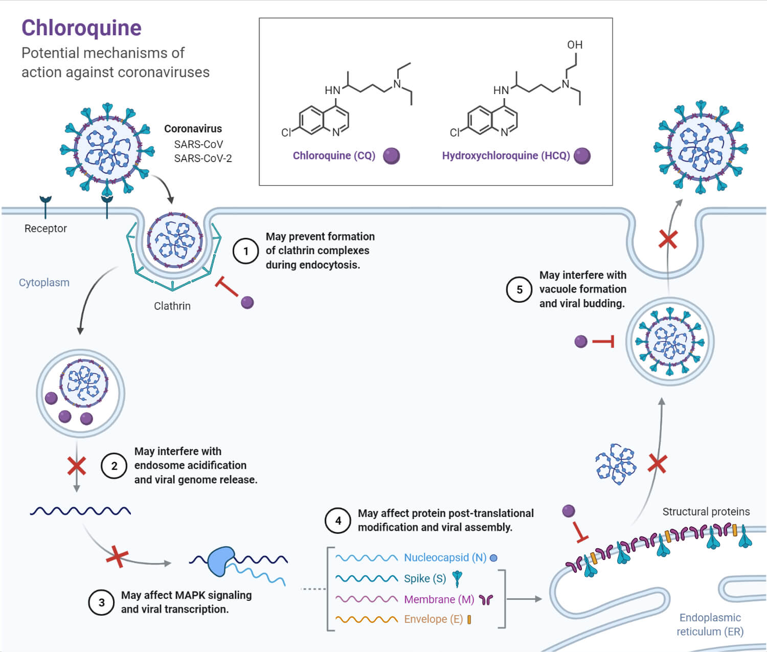 Chloroquine_ Potential Mechanisms of Action Against Coronaviruses