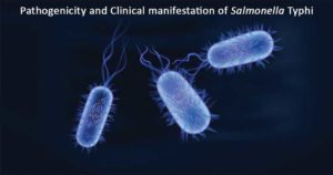 Pathogenicity and Clinical manifestation of Salmonella Typhi
