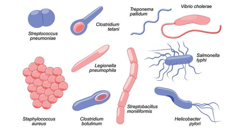 Bacterial-diseases.jpg