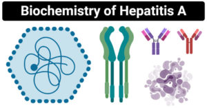 Biochemistry of Hepatitis A