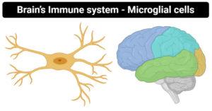 Brain's Immune system- Microglial cells