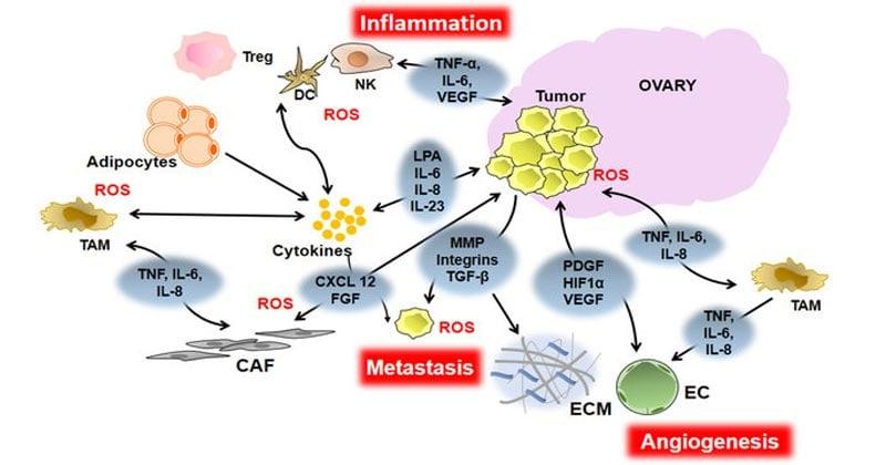 Inflammatory Mediators