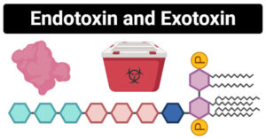 Endotoxin and Exotoxin