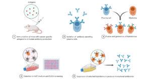 Production of monoclonal antibodies