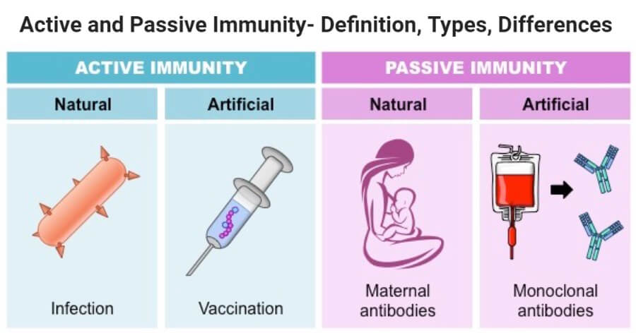 Active and Passive Immunity- Definition, Types, Differences