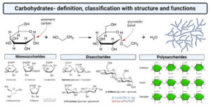 Carbohydrates- definition, classification with structure and functions