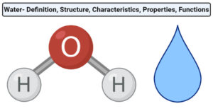 Water- Definition, Structure, Characteristics, Properties, Functions