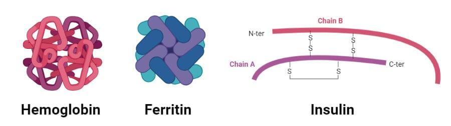Globular Proteins- Hemoglobin and Insulin