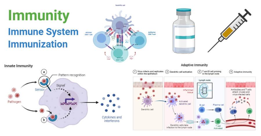 Immunity- Immune System and Immunization