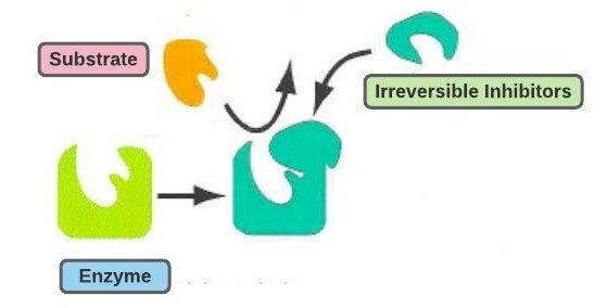 Irreversible inhibition of enzymes