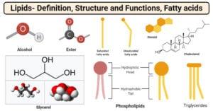 Lipids and Fatty Acids