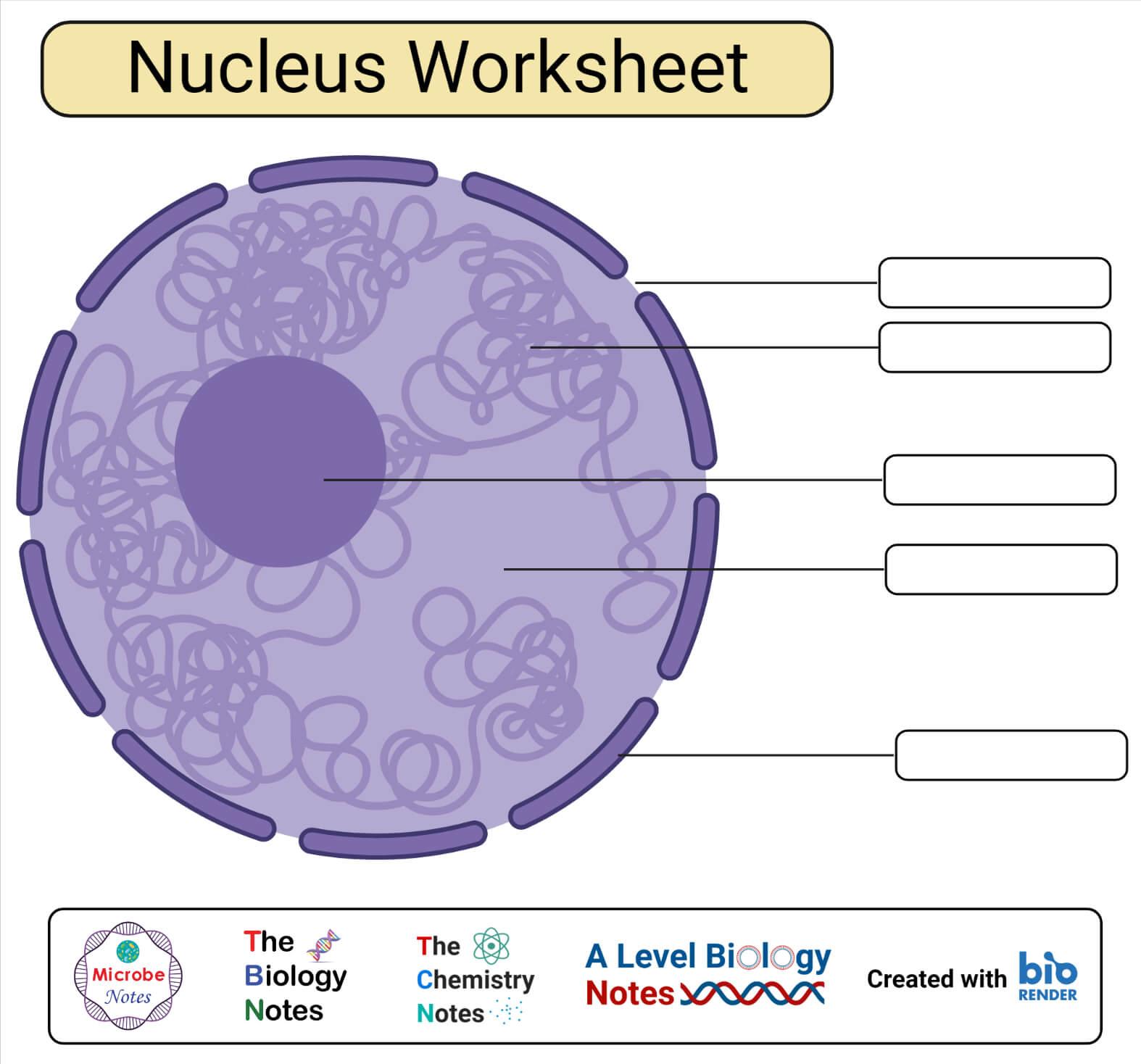 Nucleus Structure Worksheet