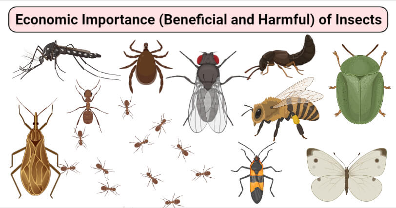 Economic Importance (Beneficial and Harmful) of Insects