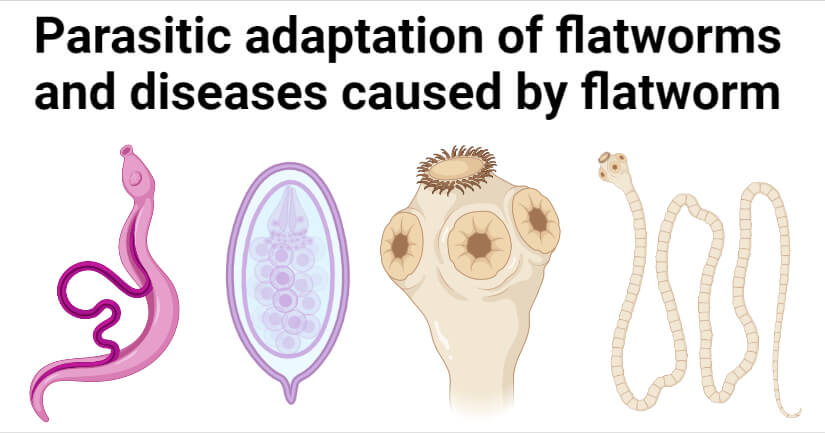 Parasitic adaptation of flatworms and diseases caused by flatworm