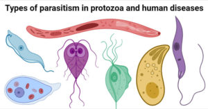Types of parasitism in protozoa and human diseases