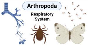 Arthropoda- 4 types of the respiratory systems
